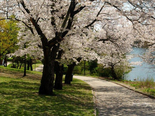 beautiful-spring-day