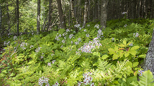 brule_forest_9218_500