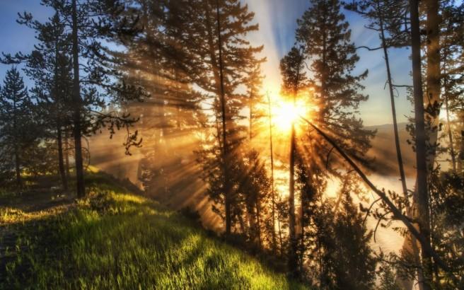 sunlight-rays-through-trees-wallpaper-1