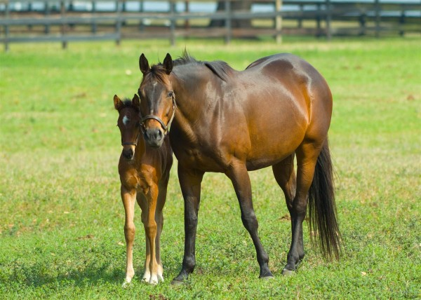 equine-horse-supplements-mare-foal2-e1340825360317