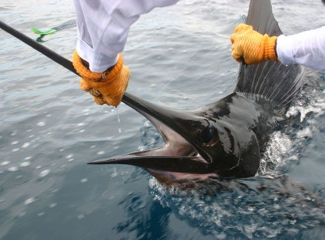 full-catch-release-sailfish-costa-rica