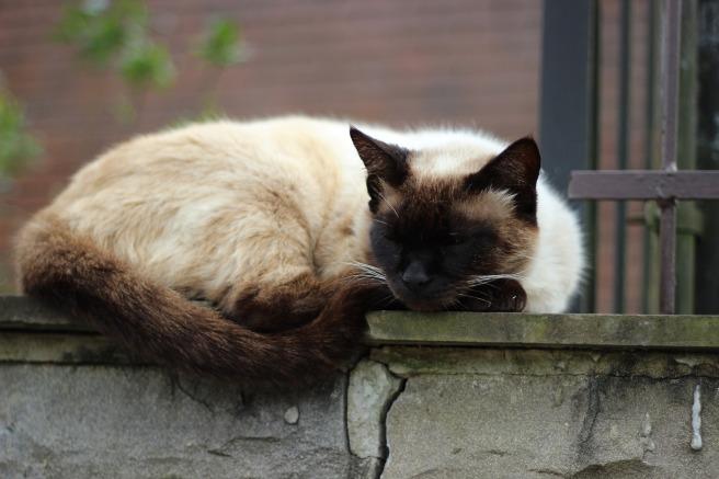 sleeping-cat-1042303_1920