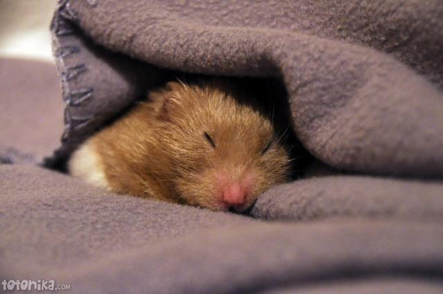 2011-01-19_cute_face_sleeping